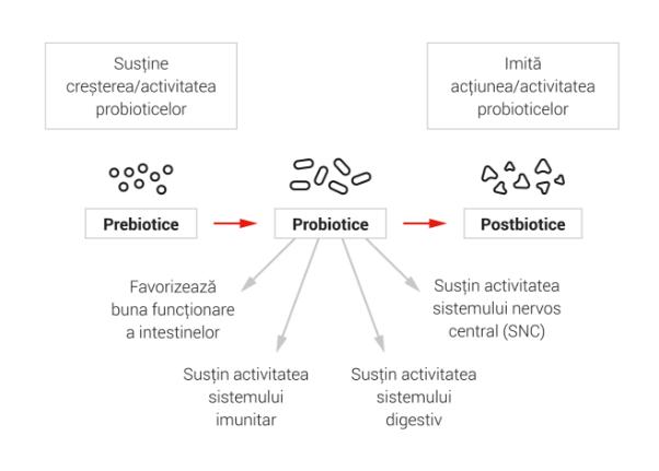 activitatea prebioticelor